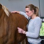 interne problemen paard