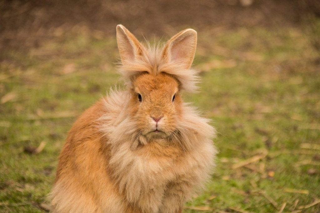 hare, rabbit, lion head