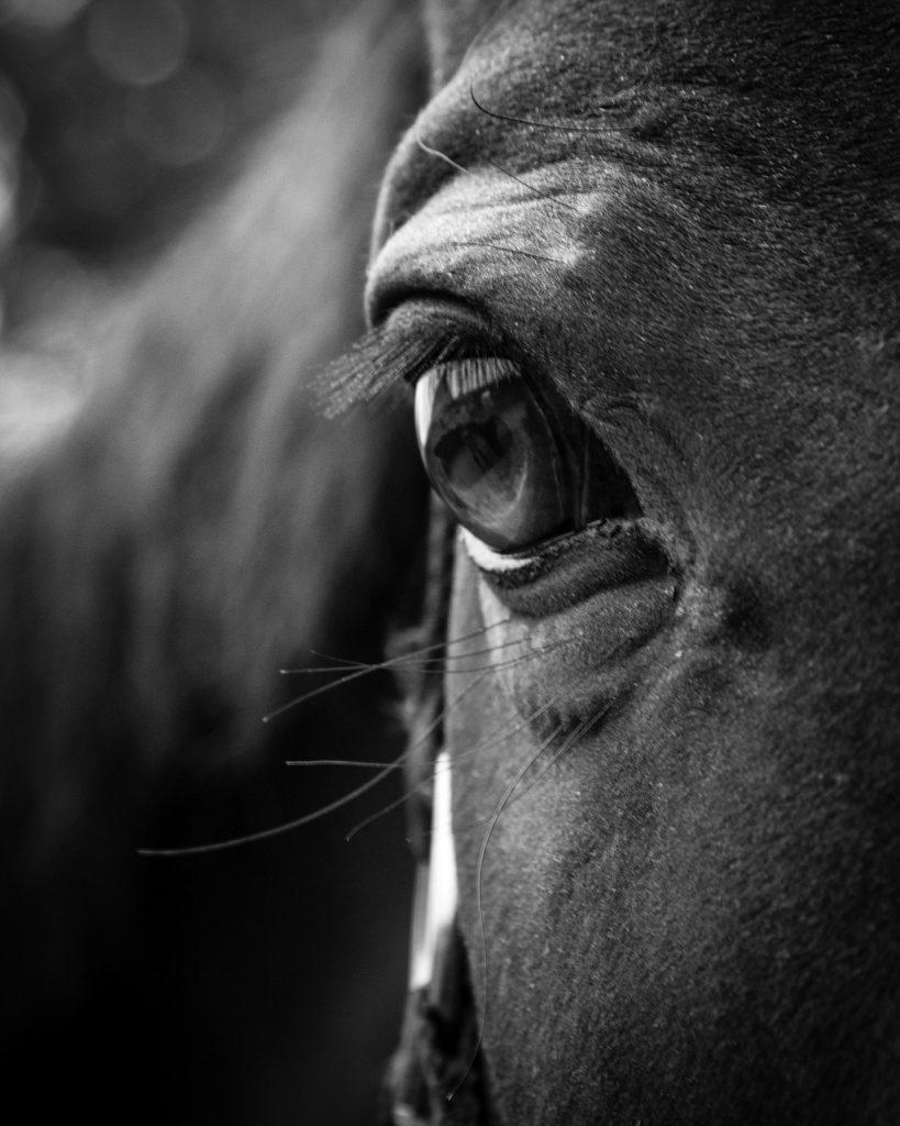 horse, eye, head