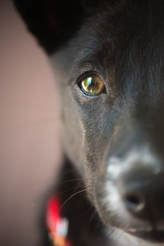 puppy, closeup, portrait