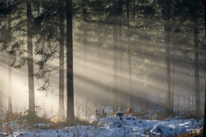 forest, trees, sunbeams